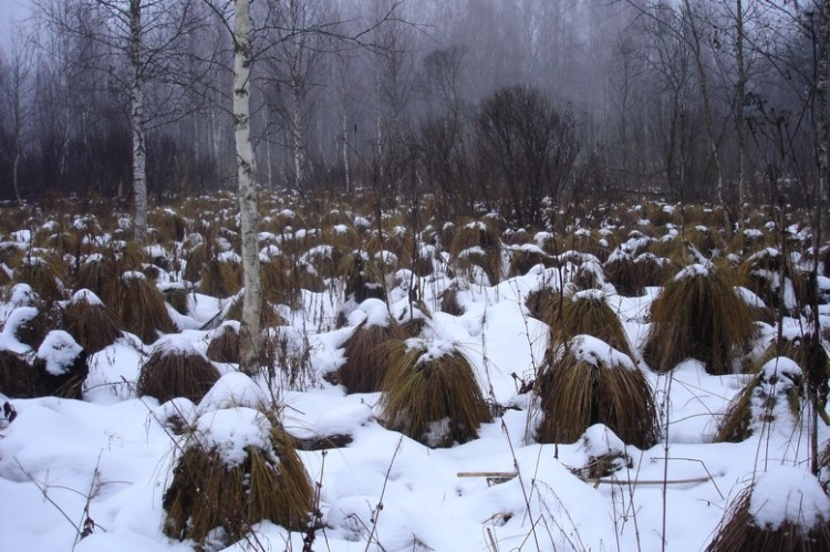 paragraph on winter season