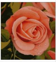 149х157 59 цветов/9смеш/ Болгарская канва/Аида22/ гобеленовый стежок в две нити.  Наверх.  Клуб Golden Kite.