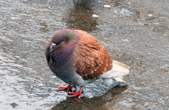 Птица разная - Страница 3 42748--5368489-m549x500