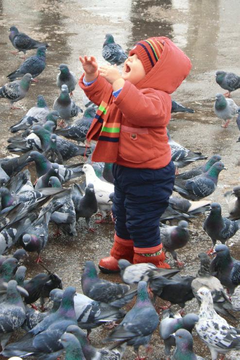 Птица разная - Страница 4 42748--5442434-m750x740