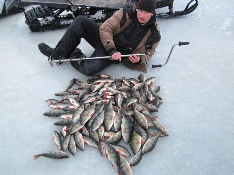 где и как ловить рыбу в ладоге