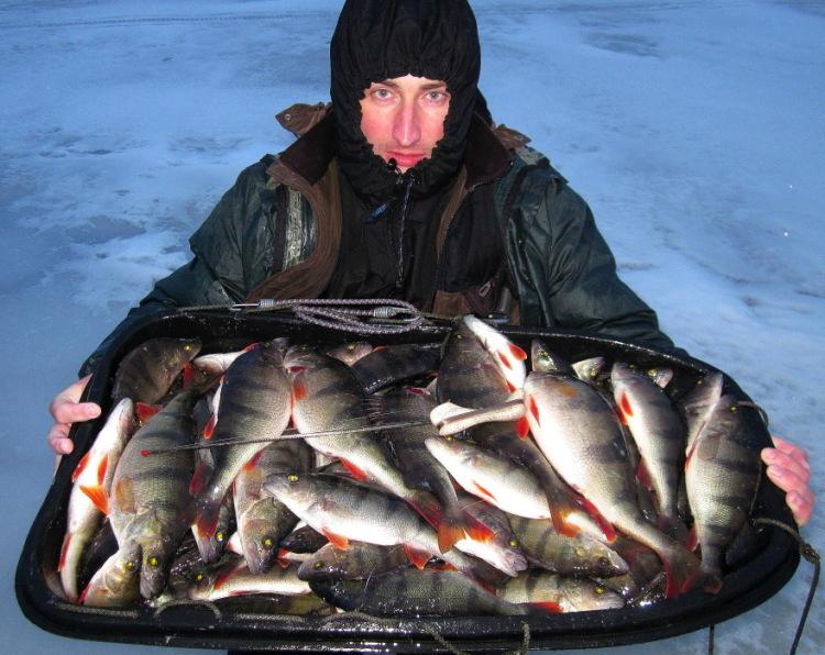 где и как ловить форель на ладожском озере