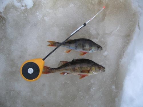 форум о рыбалке канава